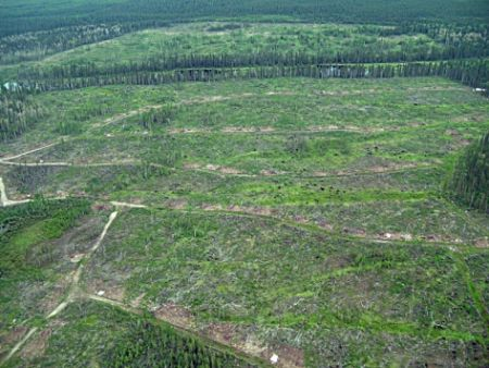 Clear-cutting in the Alberta Boreal forest. Opposition to the CBFA among First Nations is mounting.
