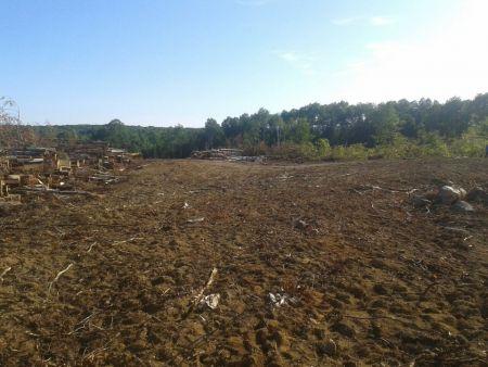 Déforestation massive dans Poigan, une des dernières forêts vierges du Québec, territoire non cédé des Algonquins traditionnels