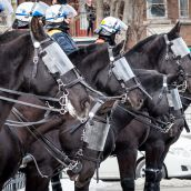 Riot Police on horses are called in the during Montreal's 18th annual Protest against Police Brutality.
