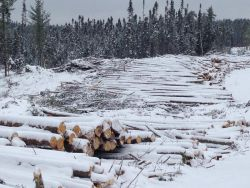 Clear-Cutting in the Portage Lake area on the territory of Barriere Lake Algonquins without consultation and community's consent